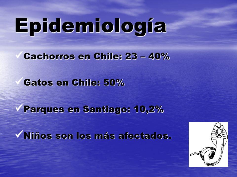 Epidemiología Cachorros en Chile: 23 – 40% Gatos en Chile: 50%