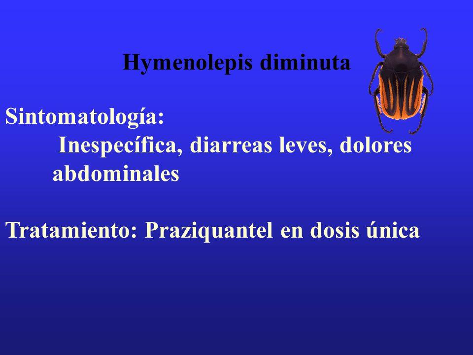 Hymenolepis diminutaSintomatología: Inespecífica, diarreas leves, dolores abdominales.