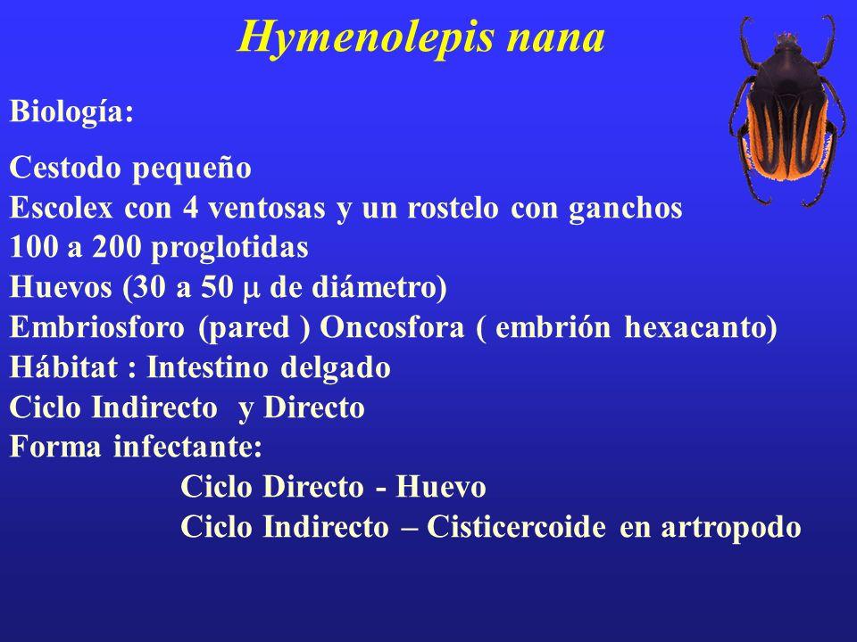 Hymenolepis nana Biología: