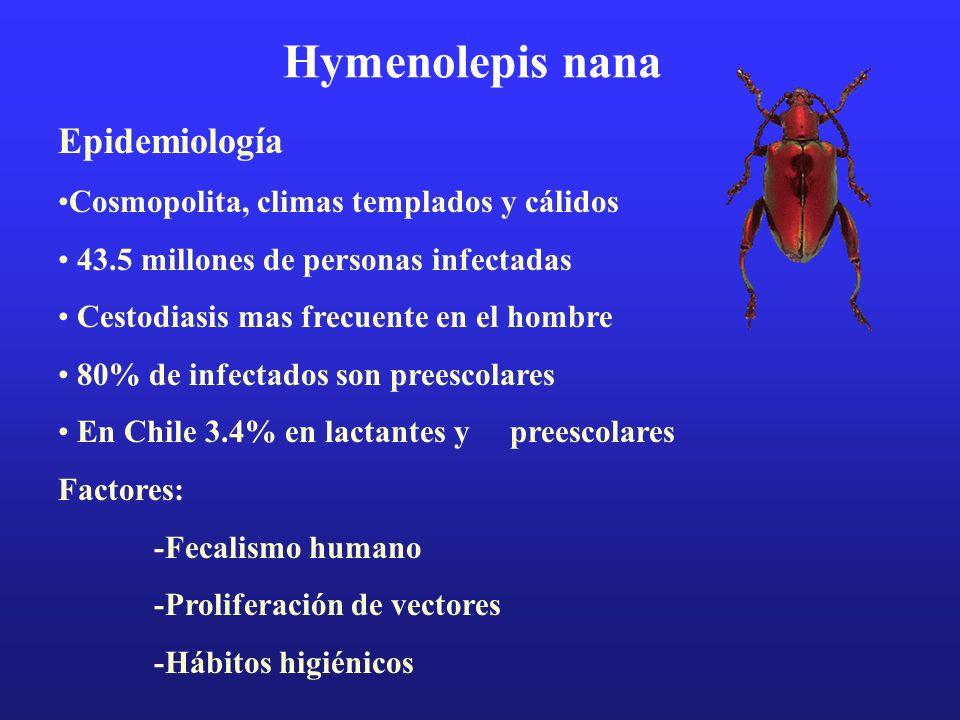 Hymenolepis nana Epidemiología Cosmopolita, climas templados y cálidos