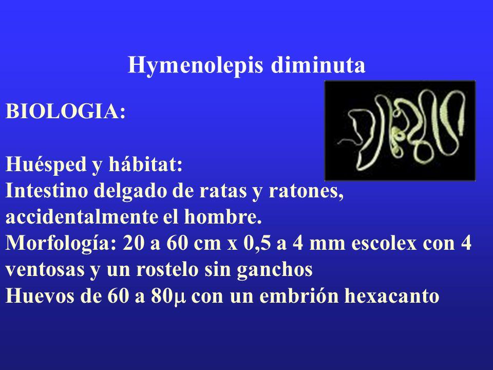 Hymenolepis diminuta BIOLOGIA: Huésped y hábitat: