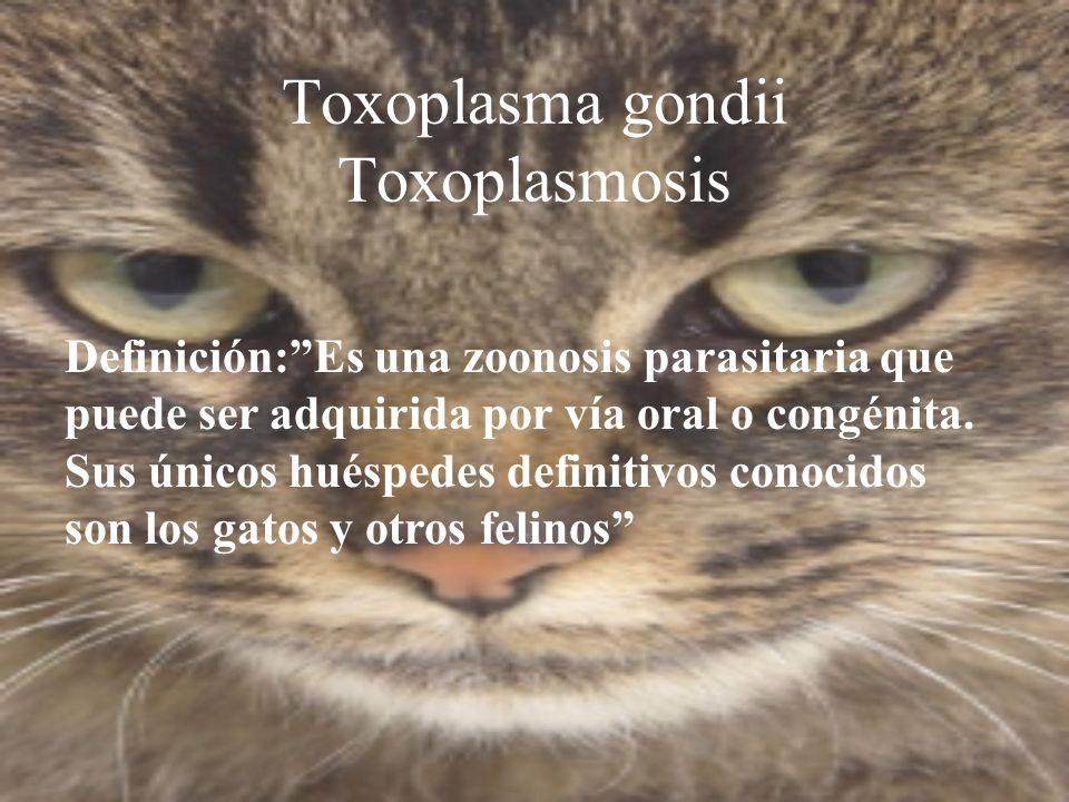 Toxoplasma gondii Toxoplasmosis