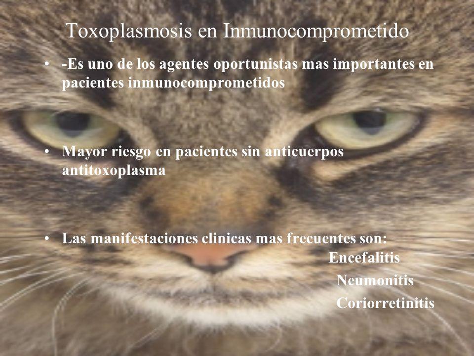 Toxoplasmosis en Inmunocomprometido