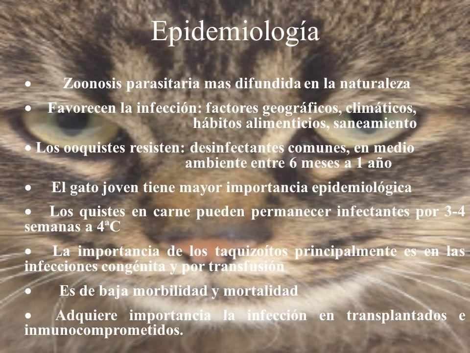 Epidemiología · Zoonosis parasitaria mas difundida en la naturaleza