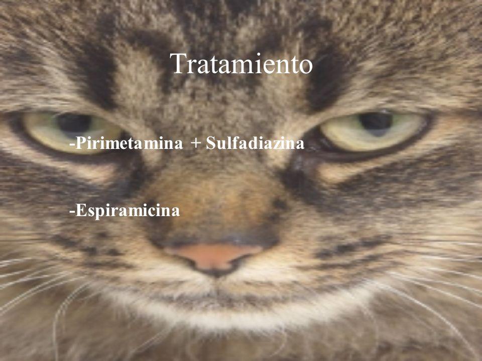 Tratamiento -Pirimetamina + Sulfadiazina -Espiramicina