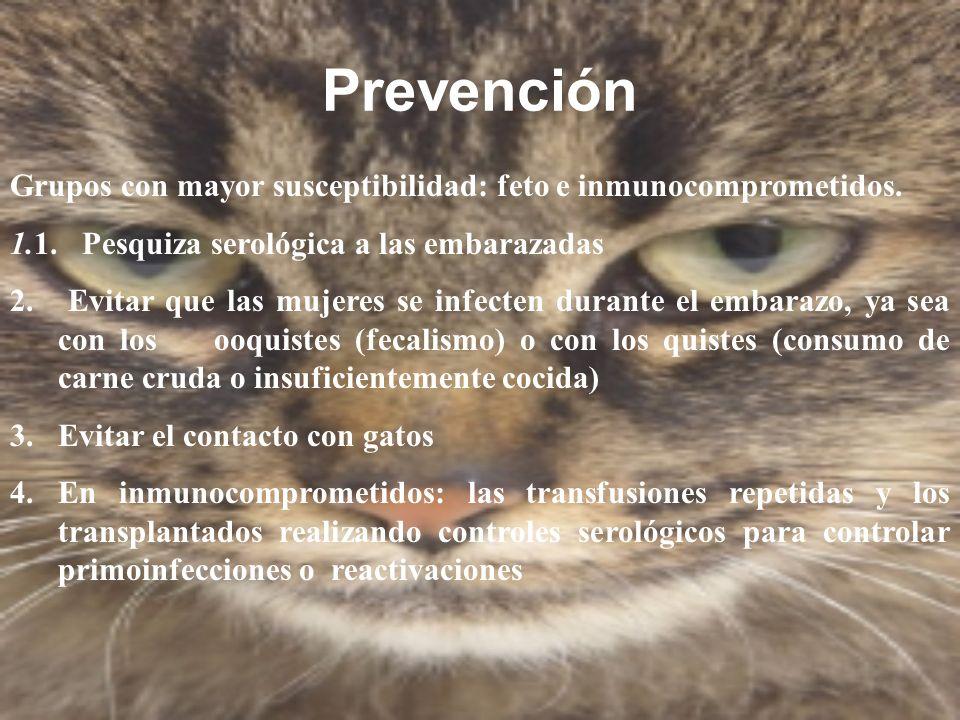 Prevención Grupos con mayor susceptibilidad: feto e inmunocomprometidos. 1.1. Pesquiza serológica a las embarazadas.