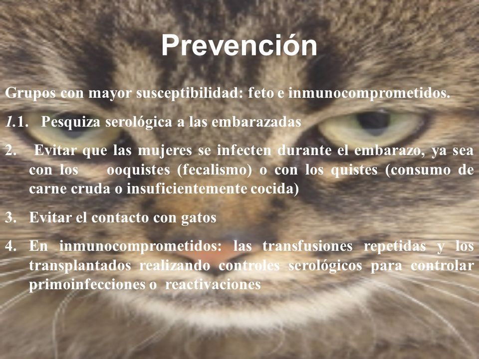 PrevenciónGrupos con mayor susceptibilidad: feto e inmunocomprometidos. 1.1. Pesquiza serológica a las embarazadas.