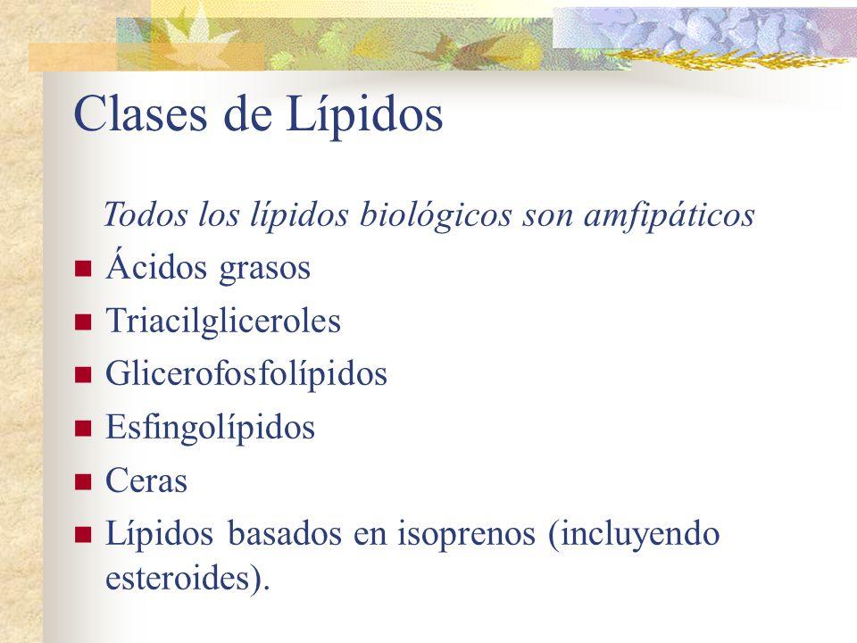 Todos los lípidos biológicos son amfipáticos