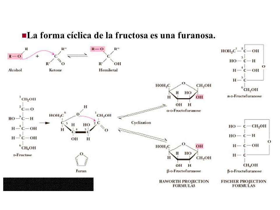 La forma cíclica de la fructosa es una furanosa.