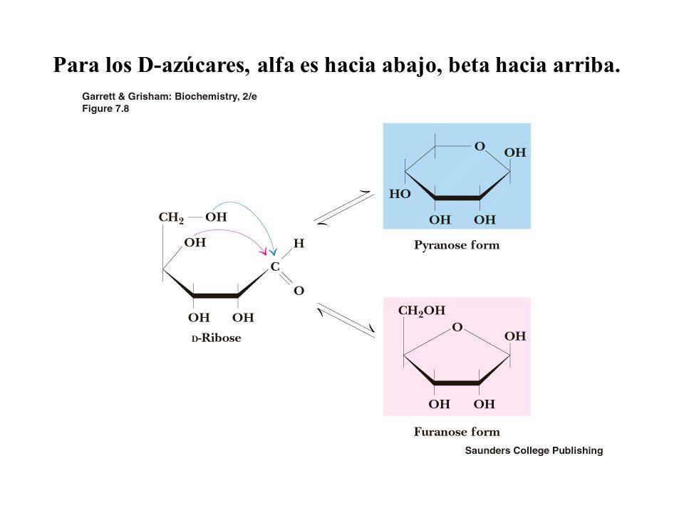 Para los D-azúcares, alfa es hacia abajo, beta hacia arriba.