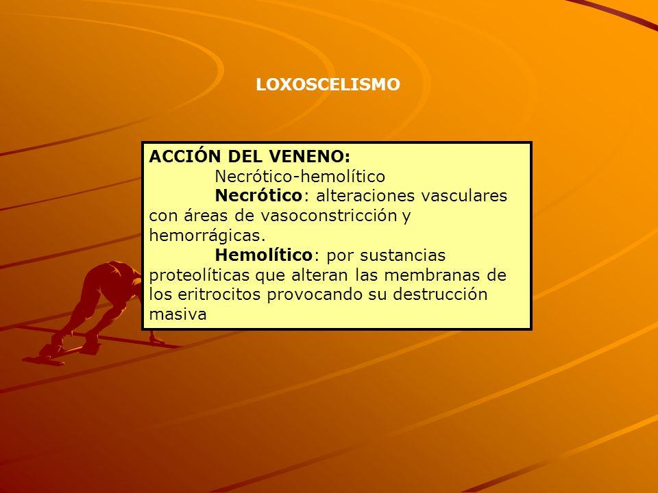 LOXOSCELISMOACCIÓN DEL VENENO: Necrótico-hemolítico. Necrótico: alteraciones vasculares con áreas de vasoconstricción y hemorrágicas.