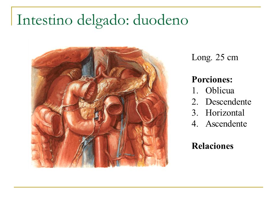 Intestino delgado: duodeno