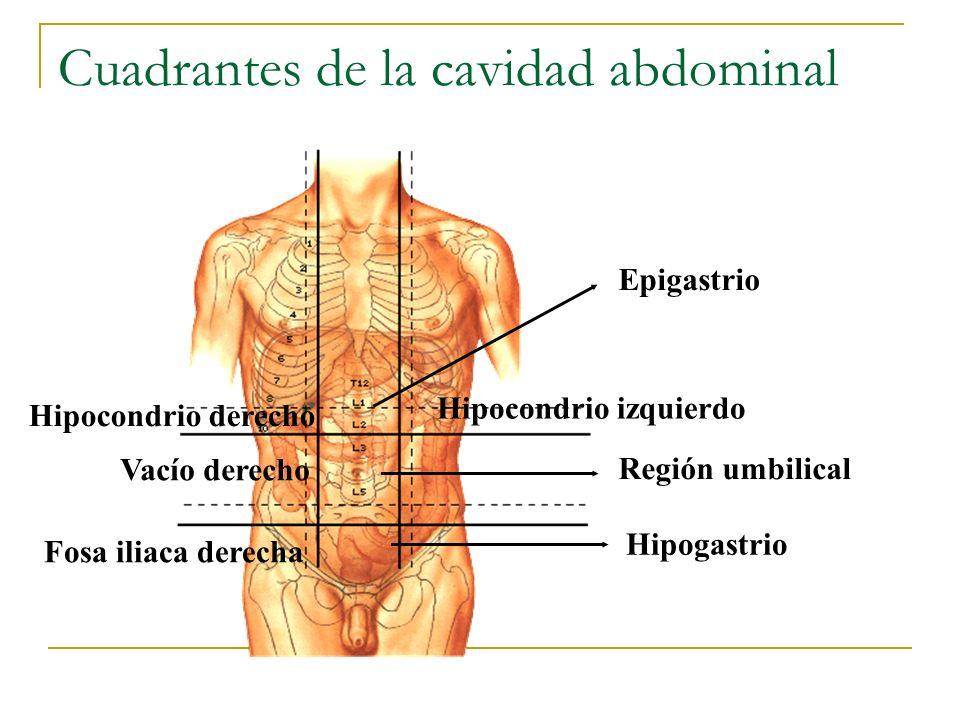 Cuadrantes de la cavidad abdominal