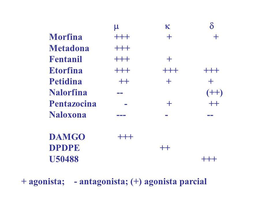    Morfina +++ + +