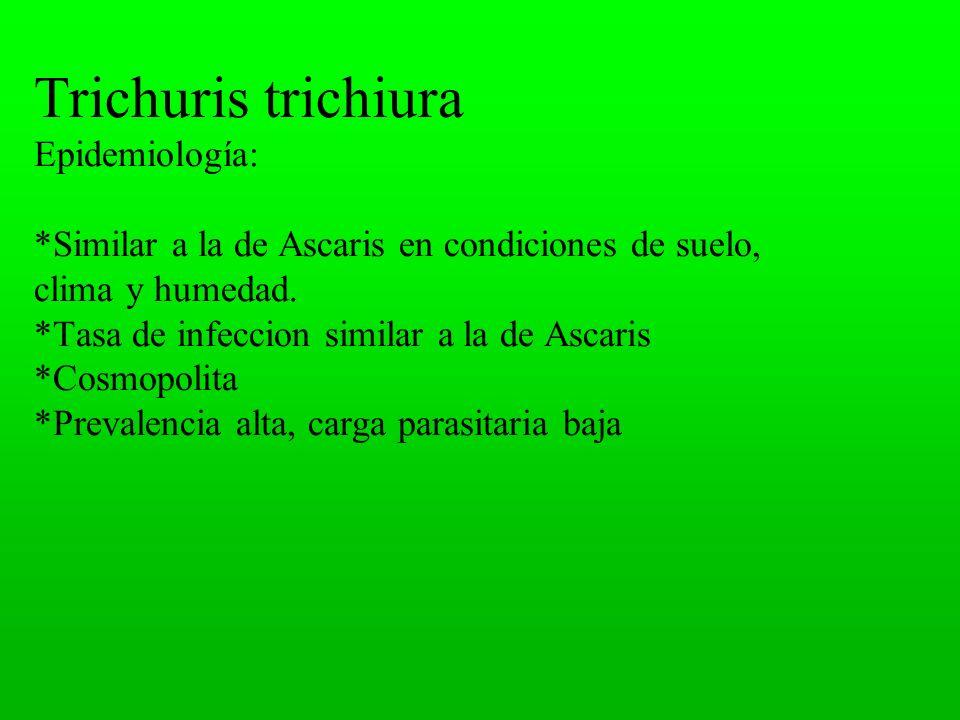 Trichuris trichiura Epidemiología: