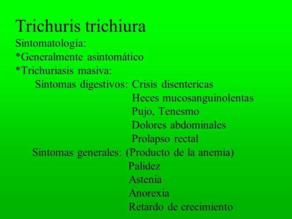 Trichuris trichiura Sintomatología:. Generalmente asintomático