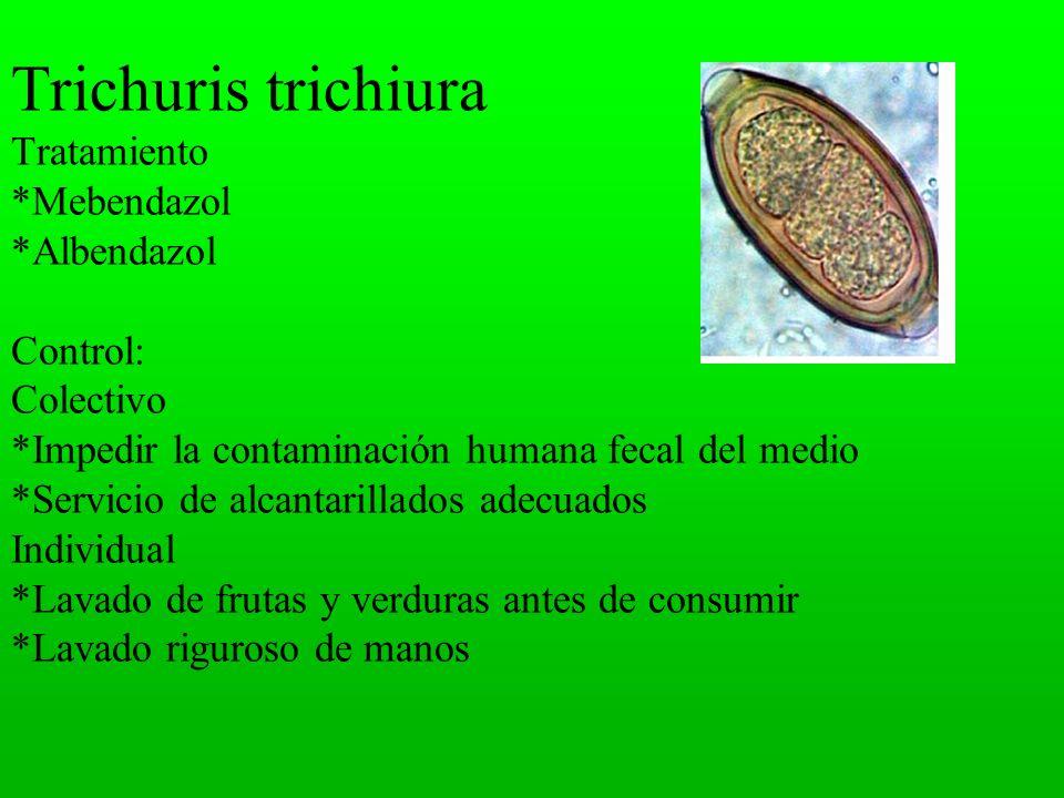 Trichuris trichiura Tratamiento. Mebendazol
