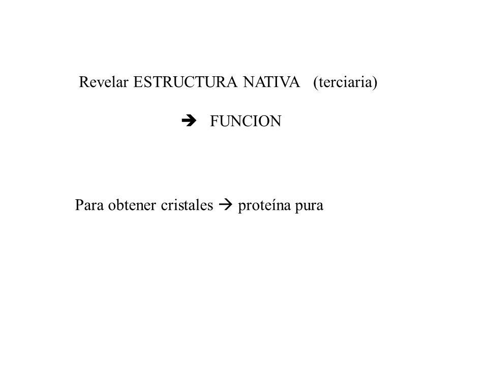 Revelar ESTRUCTURA NATIVA (terciaria)