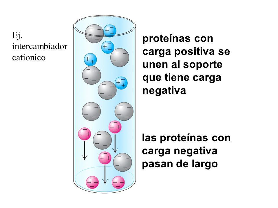 las proteínas con carga negativa pasan de largo