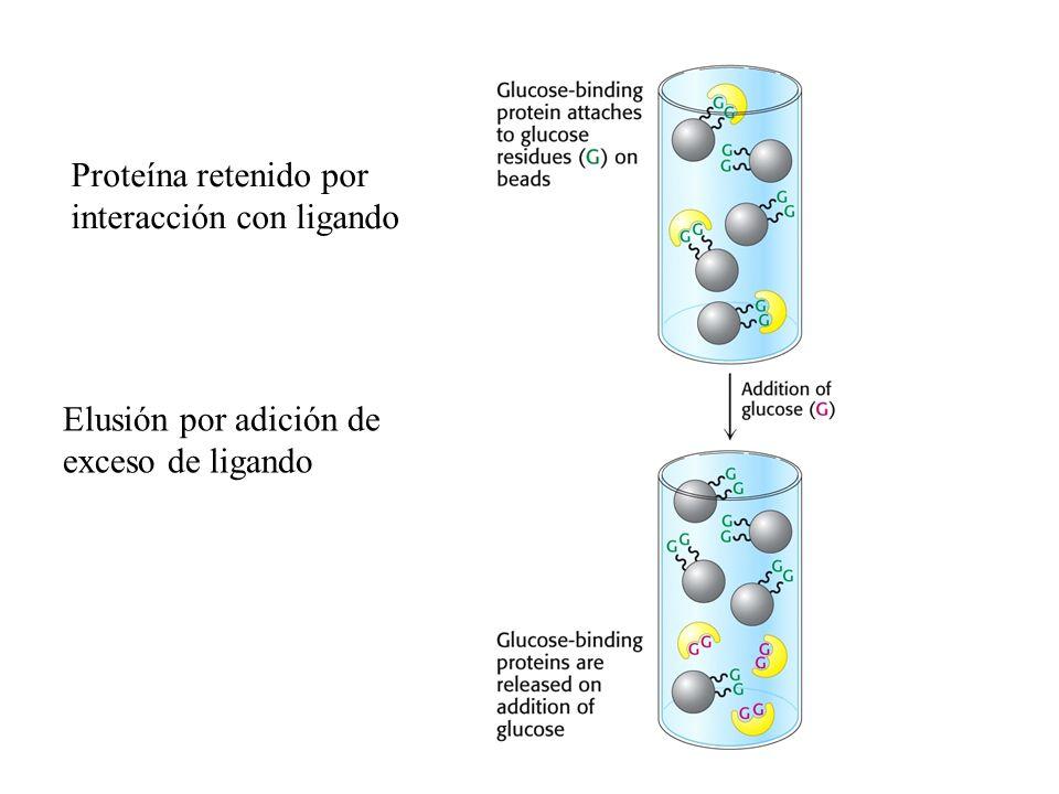 Proteína retenido por interacción con ligando