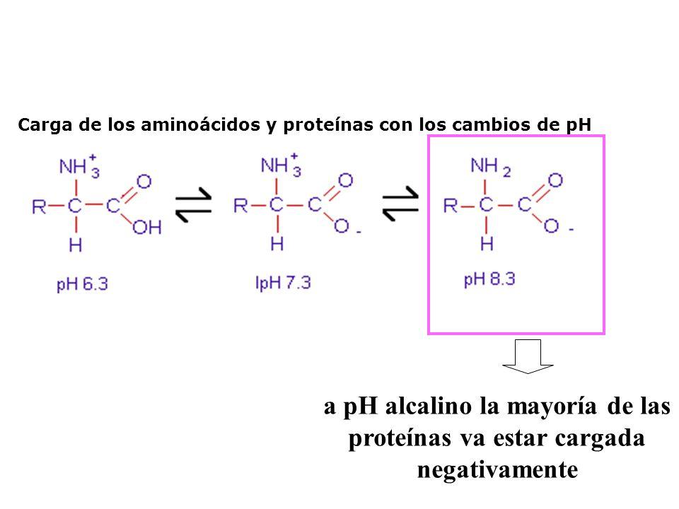 Carga de los aminoácidos y proteínas con los cambios de pH