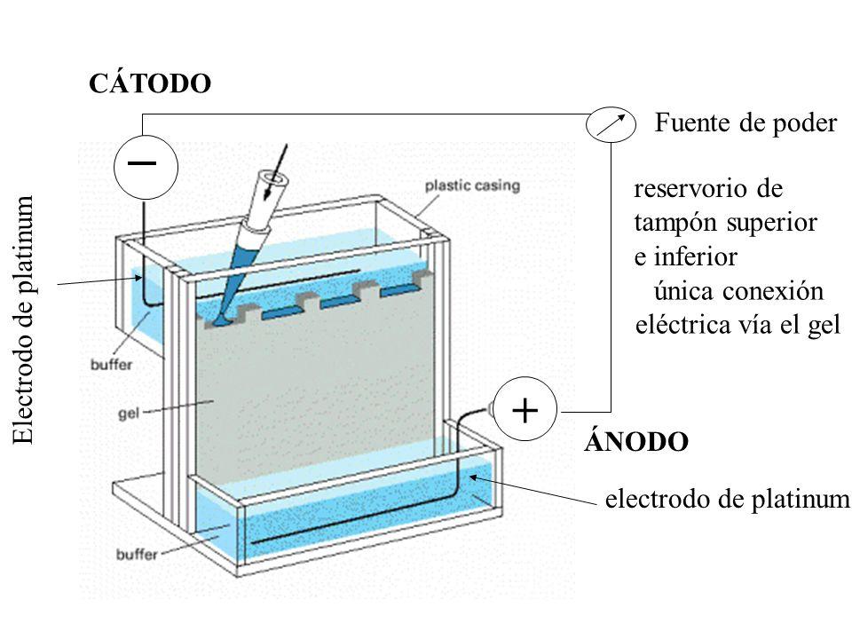 única conexión eléctrica vía el gel