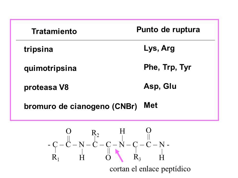Punto de rupturaTratamiento. tripsina. quimotripsina. proteasa V8. bromuro de cianogeno (CNBr) Lys, Arg.