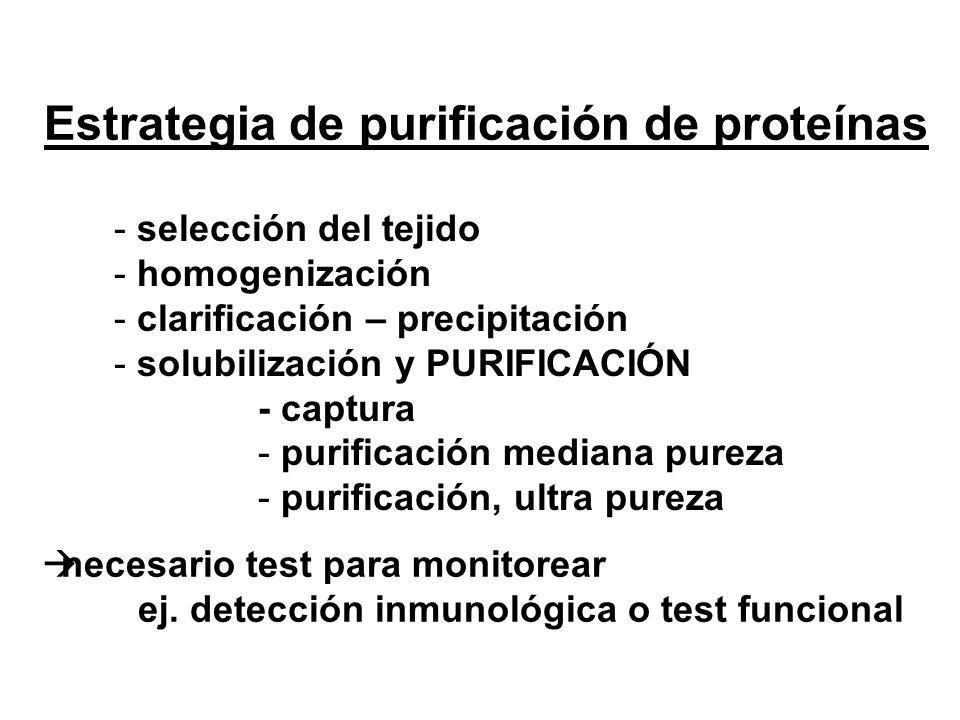 Estrategia de purificación de proteínas