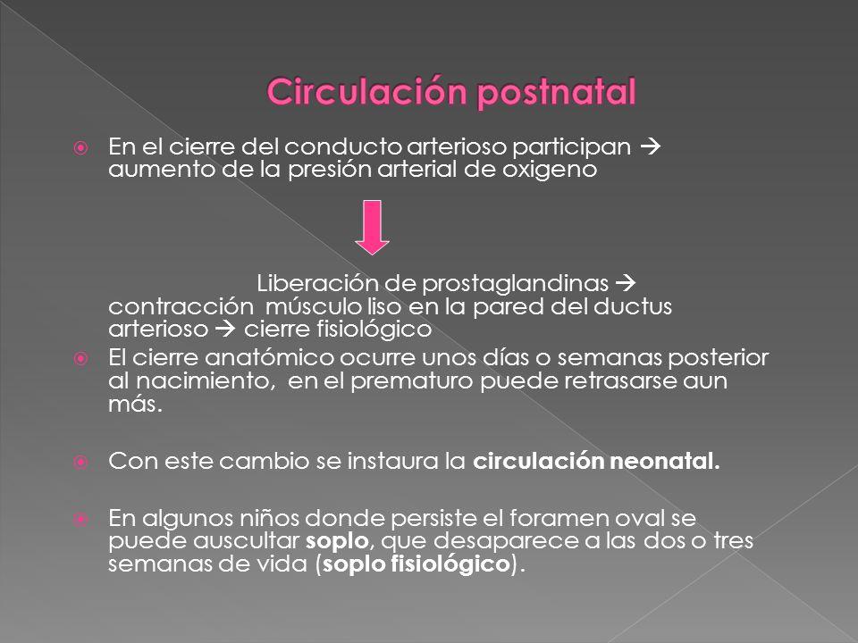 Circulación postnatal