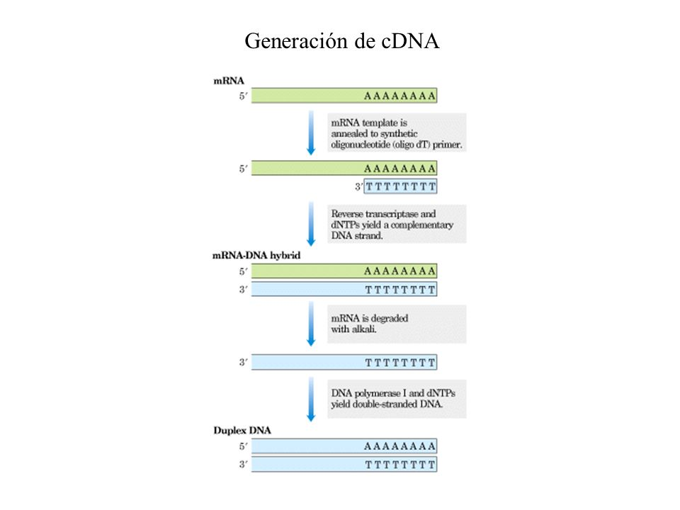 Generación de cDNA