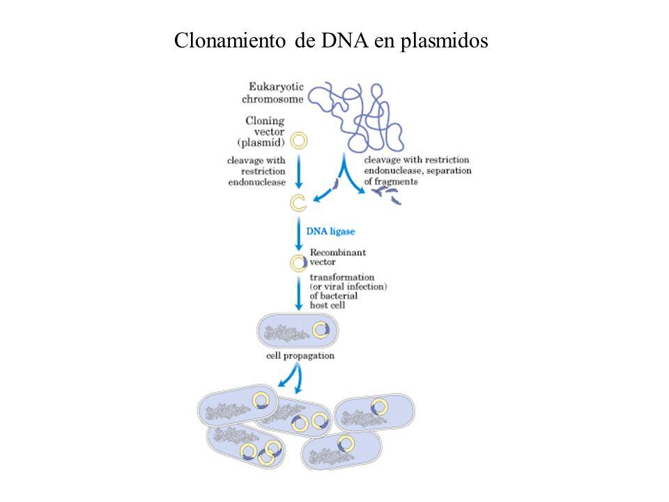 Clonamiento de DNA en plasmidos