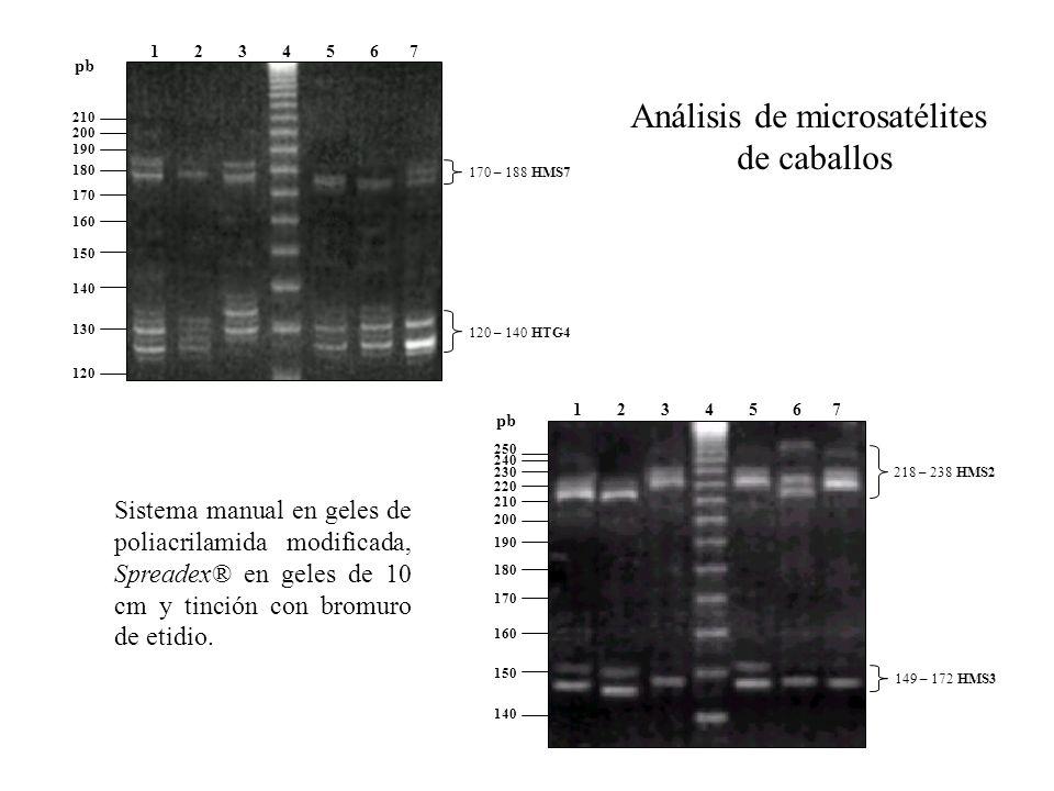 Análisis de microsatélites