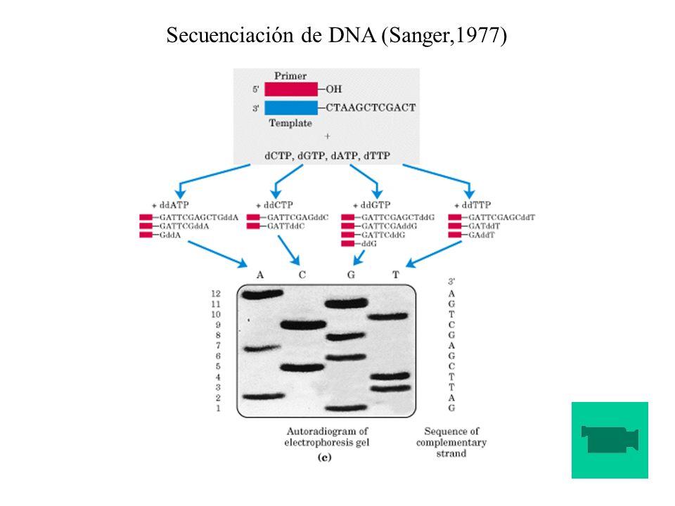 Secuenciación de DNA (Sanger,1977)