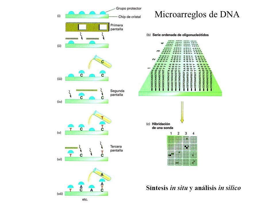 Microarreglos de DNA Síntesis in situ y análisis in silico