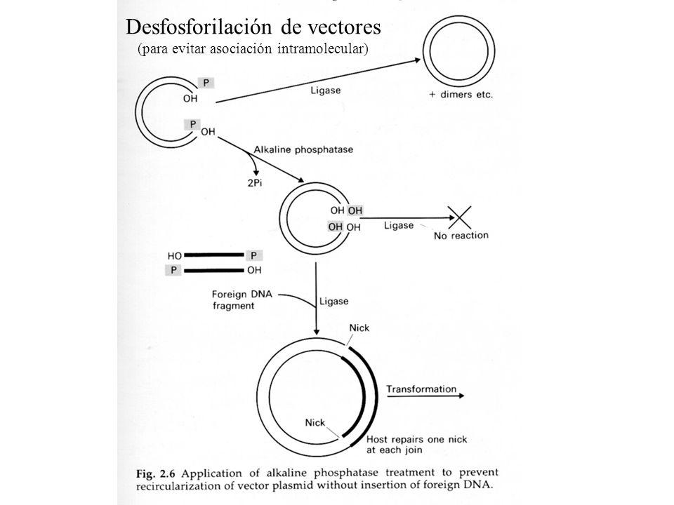 Desfosforilación de vectores