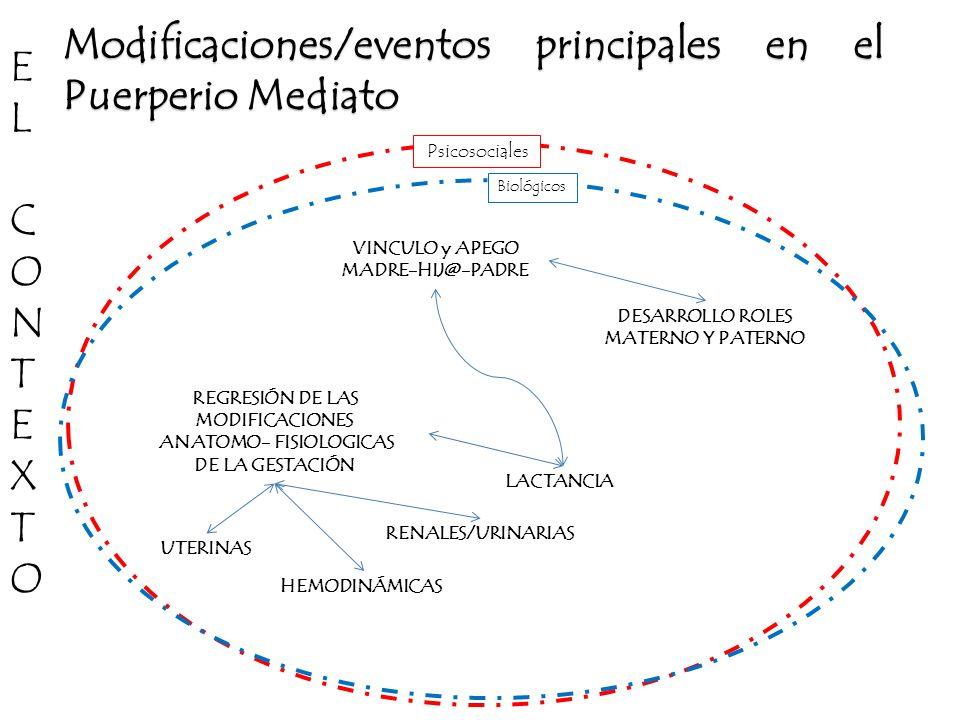 Modificaciones/eventos principales en el Puerperio Mediato E L C O N T