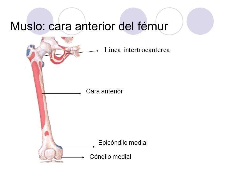 Muslo: cara anterior del fémur