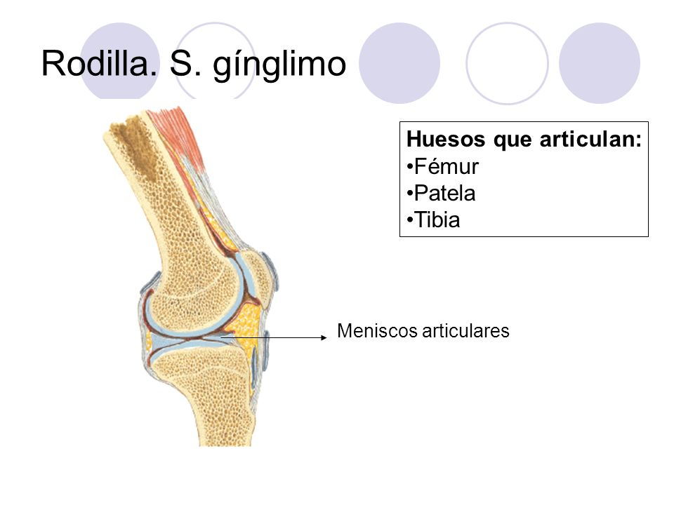 Rodilla. S. gínglimo Huesos que articulan: Fémur Patela Tibia