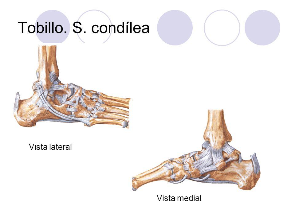 Tobillo. S. condílea Vista lateral Vista medial