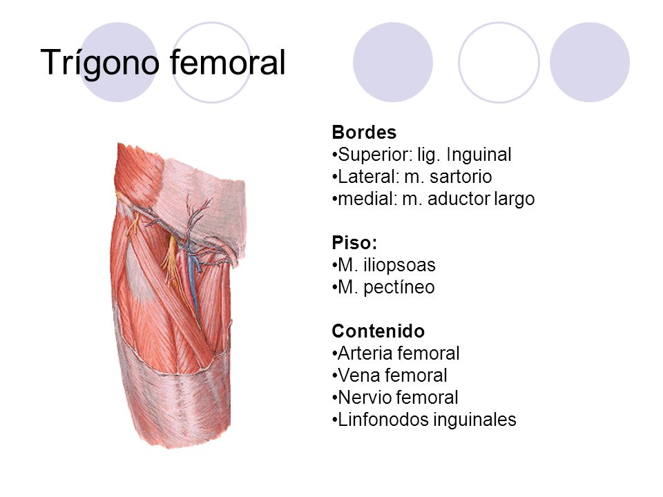 Trígono femoral Bordes Superior: lig. Inguinal Lateral: m. sartorio