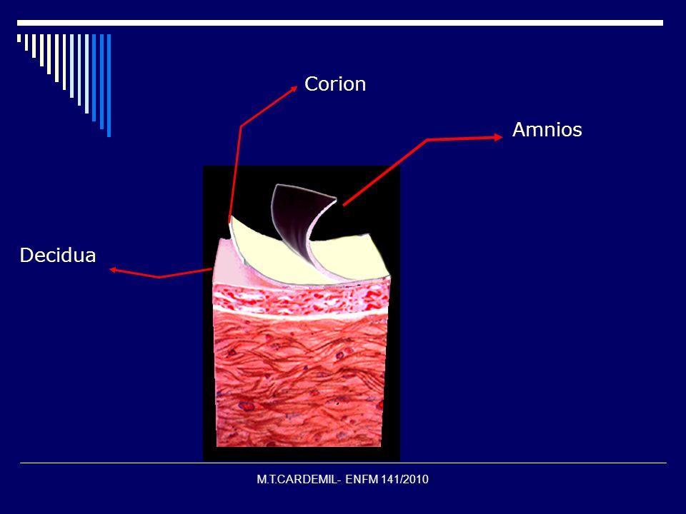 Corion Amnios Decidua M.T.CARDEMIL- ENFM 141/2010