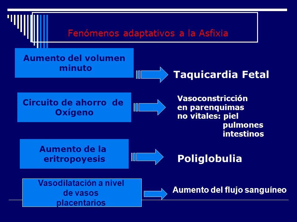 Fenómenos adaptativos a la Asfixia