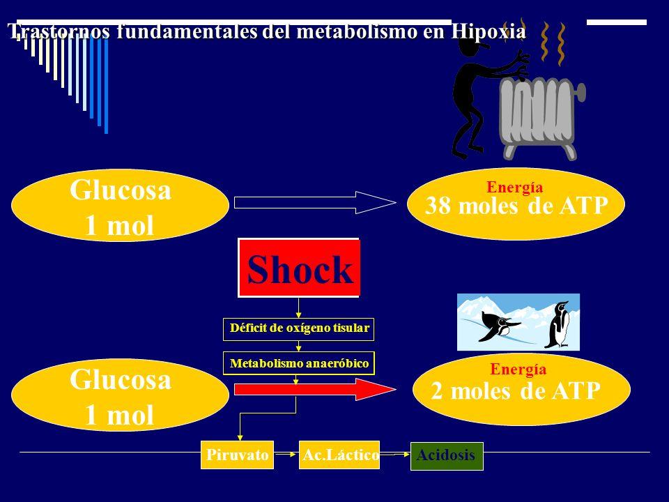 Shock Glucosa 1 mol Glucosa 1 mol 38 moles de ATP 2 moles de ATP
