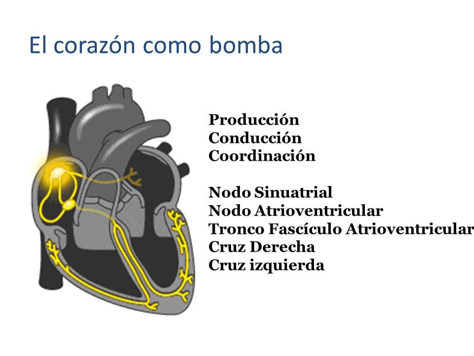 El corazón como bomba Producción Conducción Coordinación