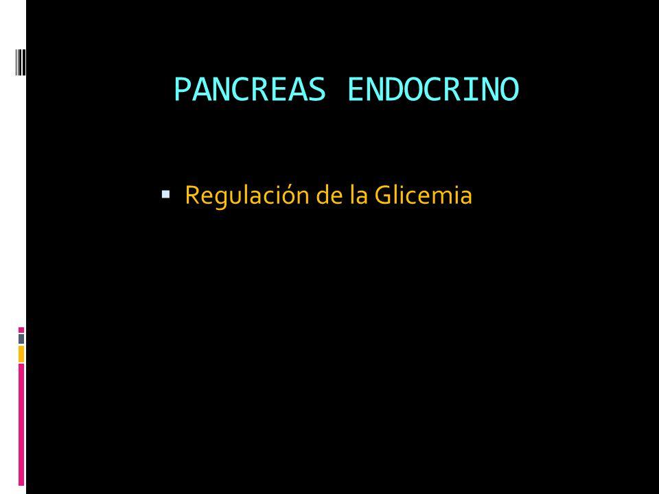 PANCREAS ENDOCRINO Regulación de la Glicemia