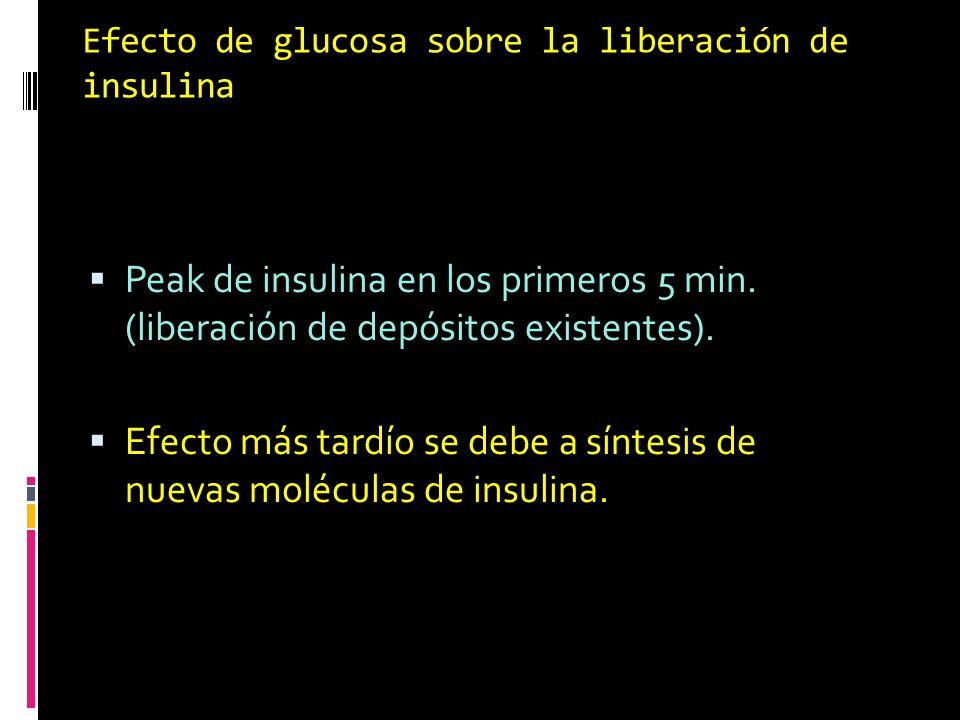 Efecto de glucosa sobre la liberación de insulina