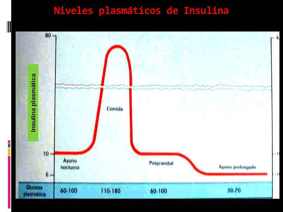 Niveles plasmáticos de Insulina