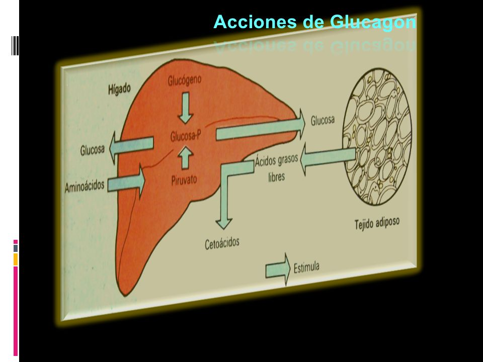 Acciones de Glucagon