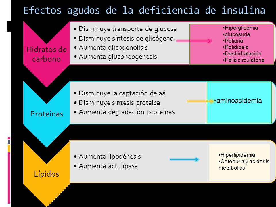 Efectos agudos de la deficiencia de insulina