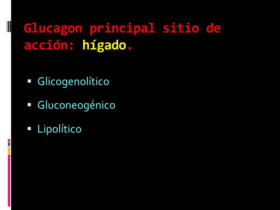 Glucagon principal sitio de acción: hígado.